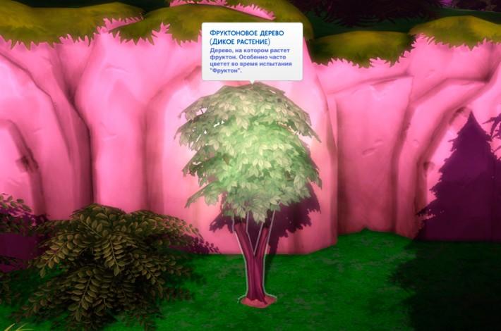 фруктоновое-дерево-в-сильван-глейд-2