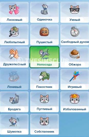 черты характера кошек