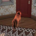 Как заставить питомца повзрослеть или воскресить его в «The Sims 4: Кошки и собаки»